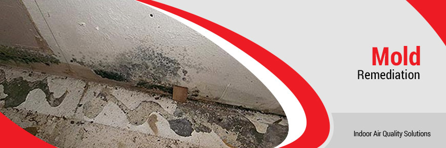 Mold Remediation in New York & New Jersey