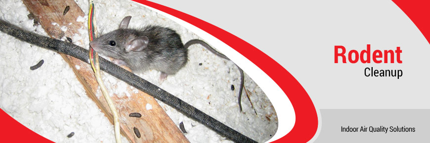 Rodent Cleanup New Jersey